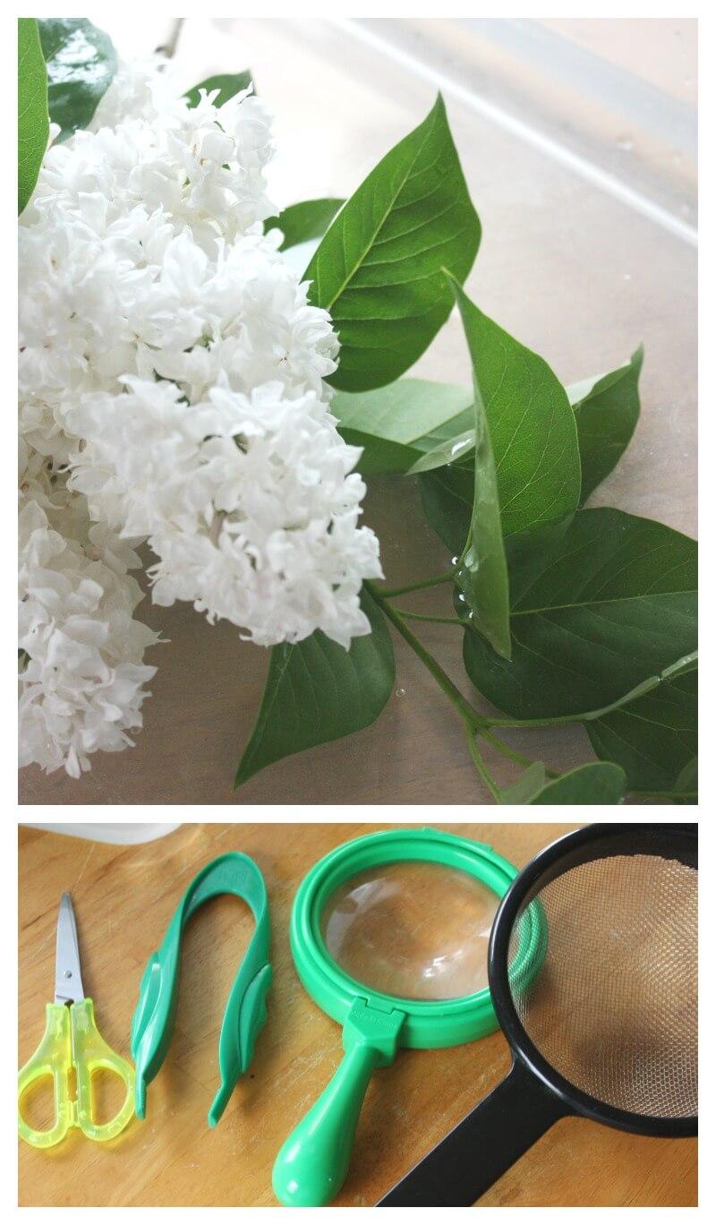 Flower Sensory Play Preschool Science Water Sensory Bin