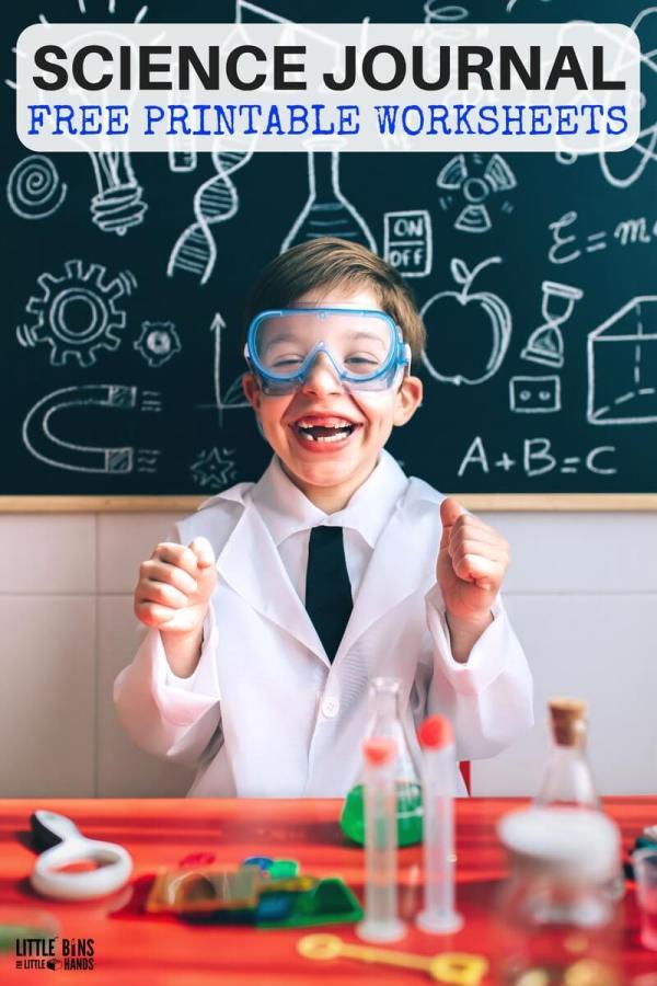 Free Science Worksheets Kids Little Bins