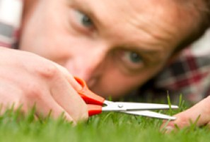 perfectionist-grass_BartCo_226x150