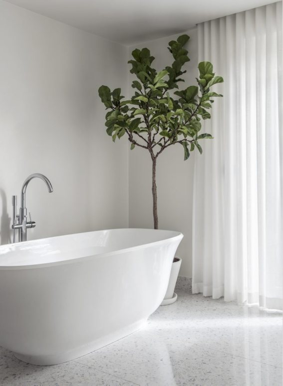 white bathroom with freestanding soaking tub and fiddle leaf fig