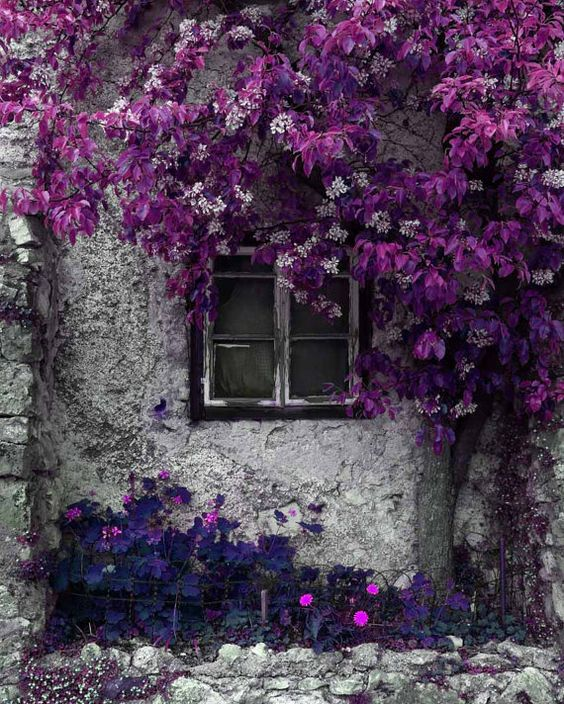 Purple Flowers on Cement House