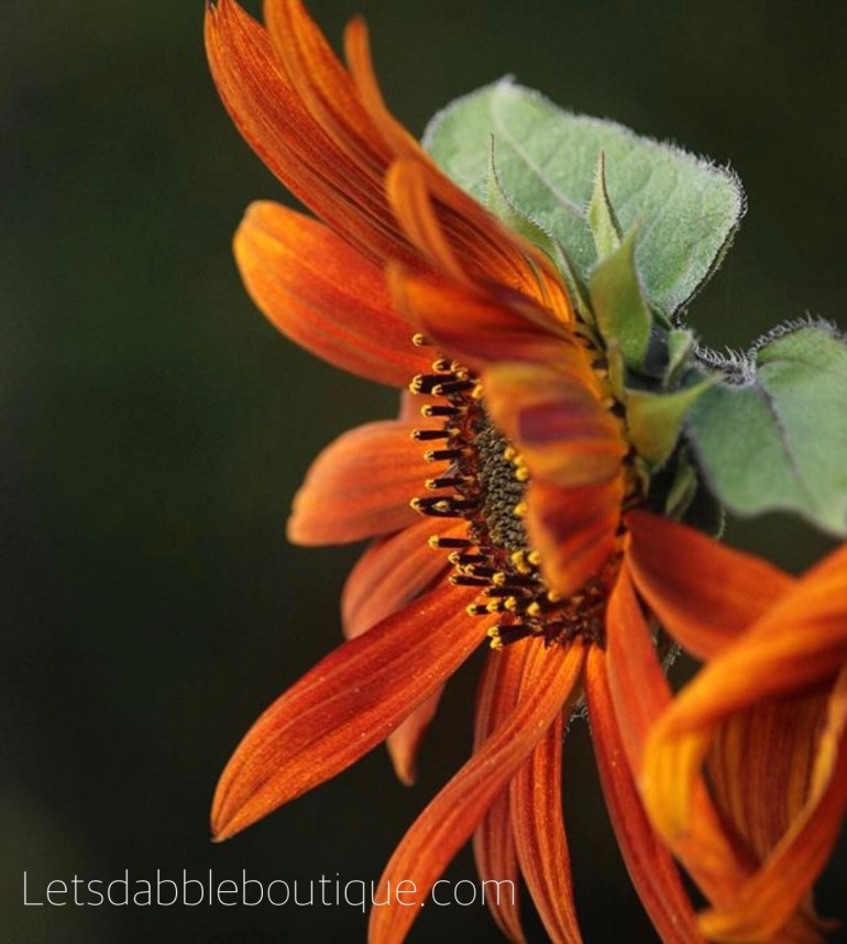 letsdabbleboutique.com Beautiful Fall Zinnia