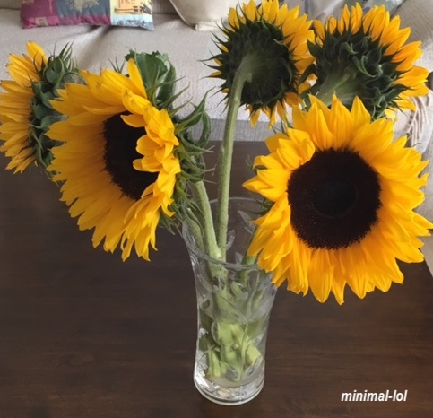 minimal-lol sunflowers