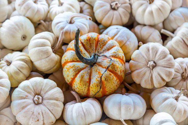 alfredschrock-white-pumpkins
