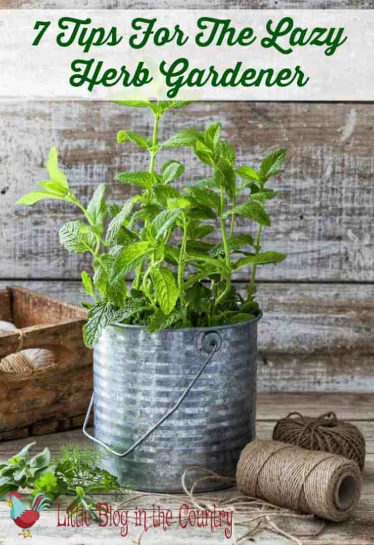 tips for the lazy herb gardener