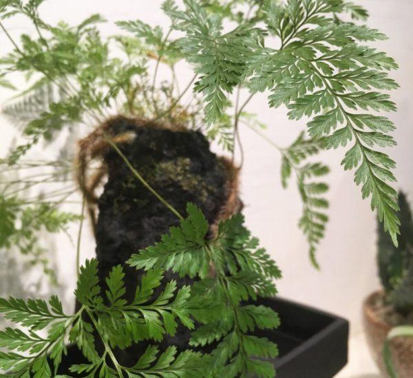 planter på badeværelset
