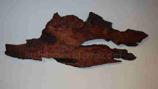 redwood burl wall art