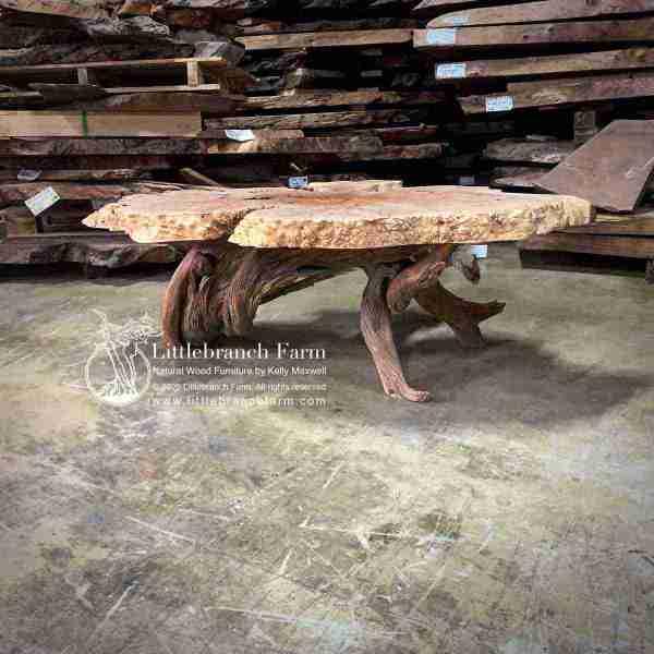 Live edge maple burl wood coffee table with juniper log base.