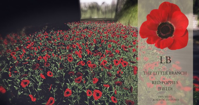 lb-red-poppies-field