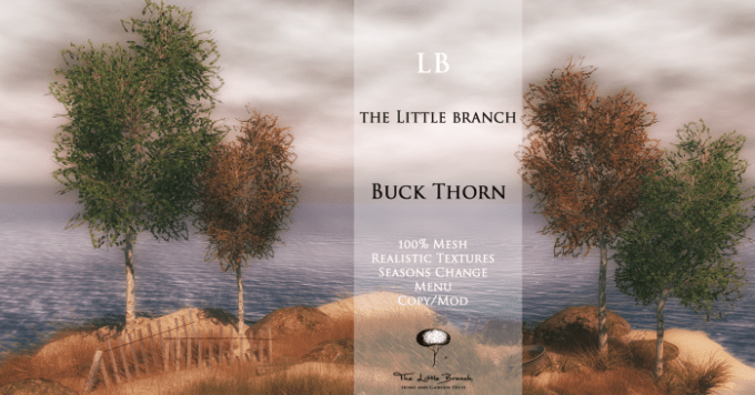 little-branch-buck-thorn-_-v2