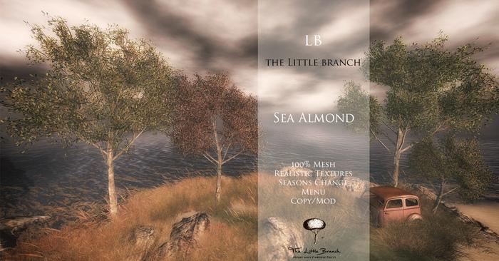 Little Branch Sea Almond {4 Seasons}