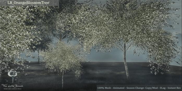 LB_OrangeBlossom{Animated}_Seasons