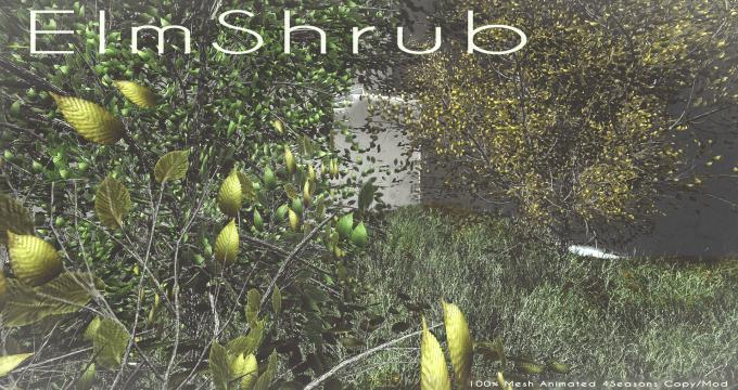 ElmShrub.png