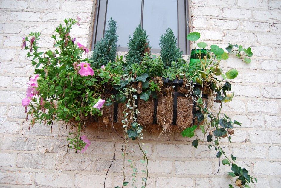 window baskets