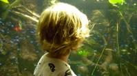 Studying the fish at the Aquarium.