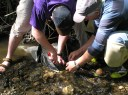 Aquatic insects are a great way to gauge the health of the River