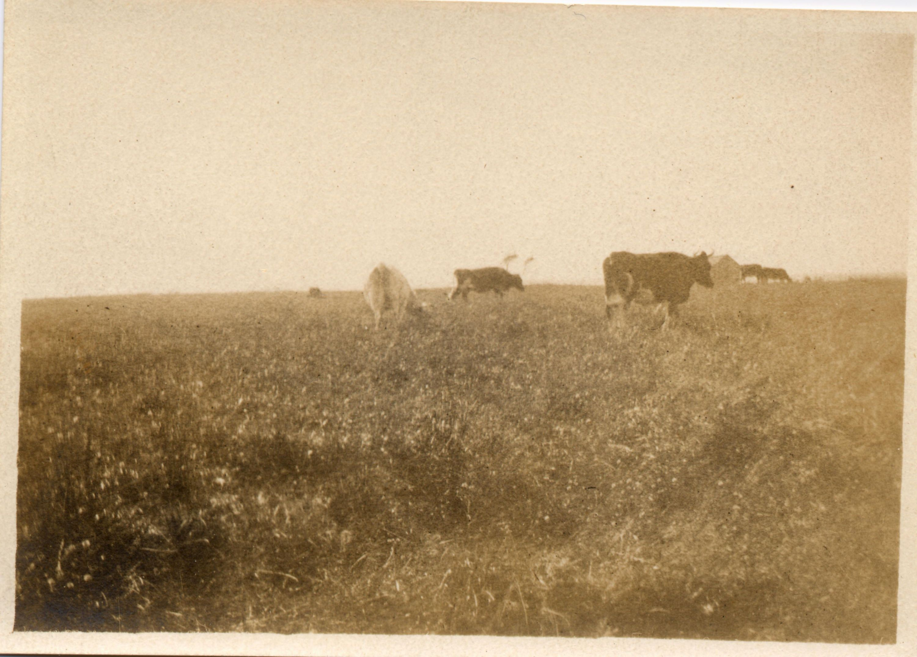 Agricultural Images - Little Compton Historical Society