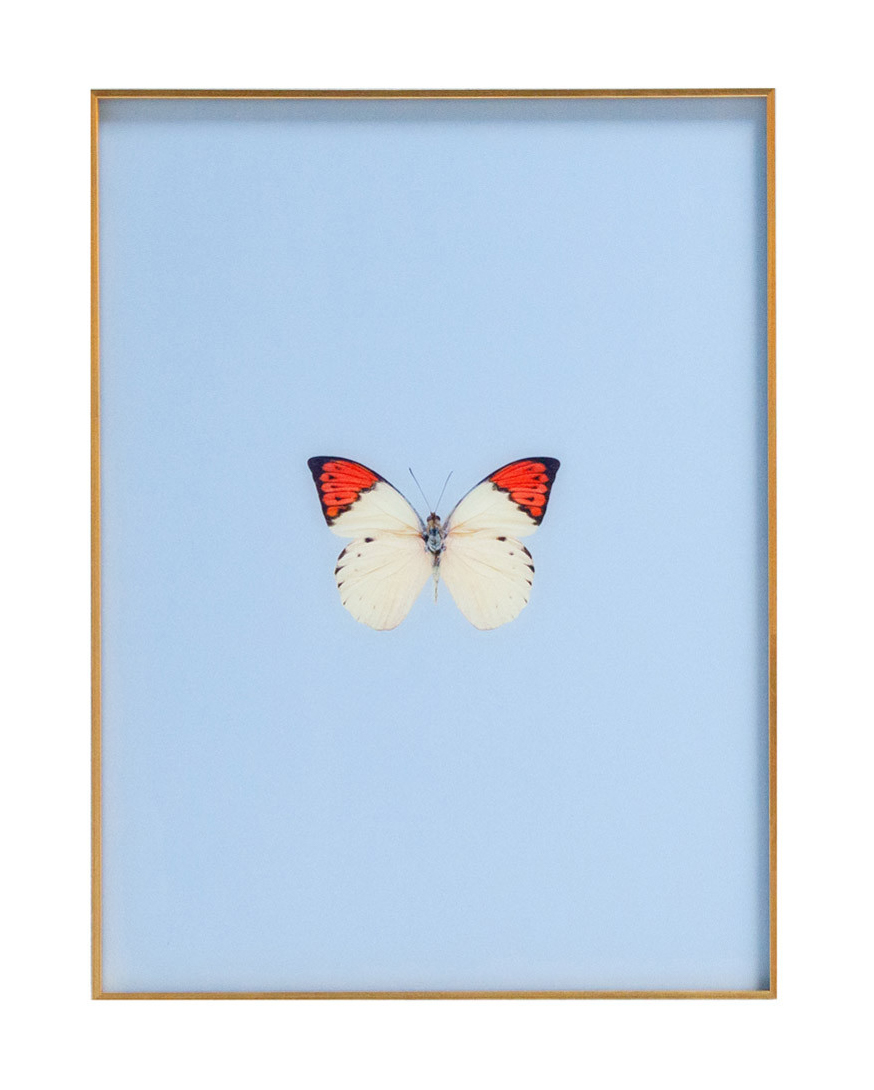 Nursery Butterfly Wall Art