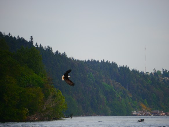 Seeing Bald Eagles fishing at the beginning of a trip is good luck for me.