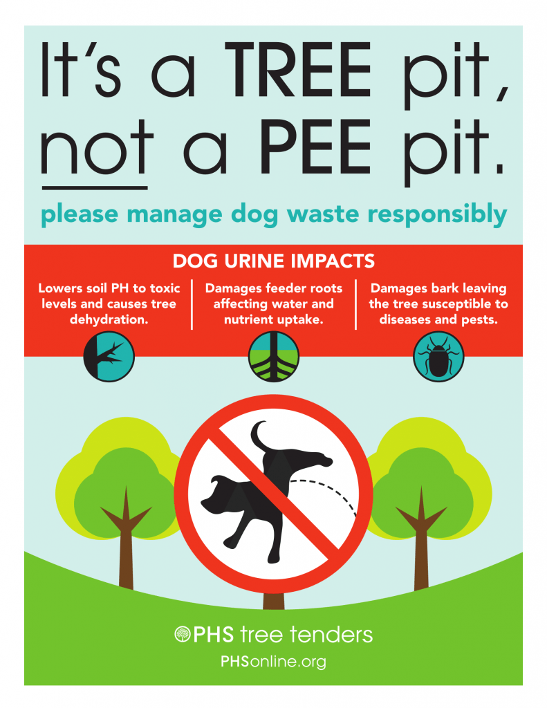A new campaign by Old City Green (designed in partnership with the Pennsylvania Horticultural Society) hopes to teach dog owners about the deadly impact of dog urine on trees
