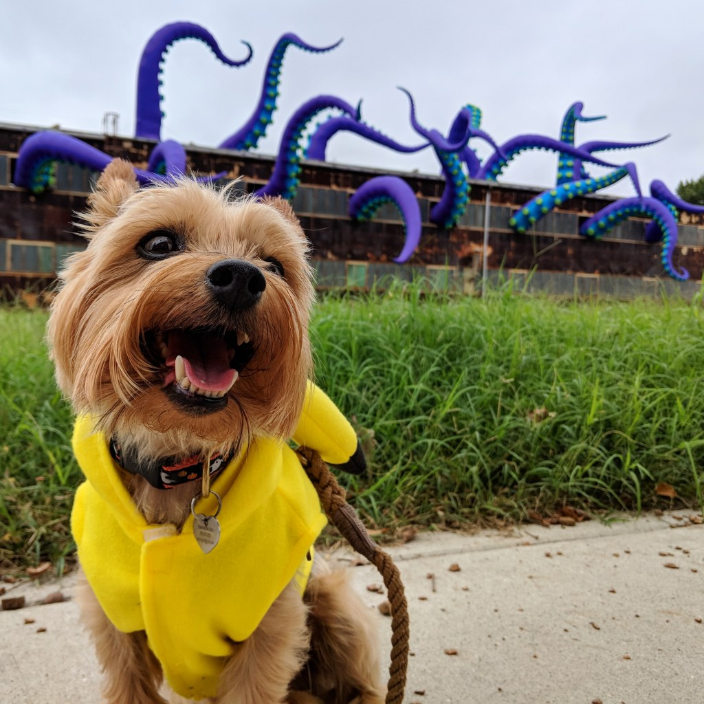 A small dog stands in front of an abandoned building. Out of each window is a gigantic inflatable purple tentacle, which makes it look like the building contains a monster.