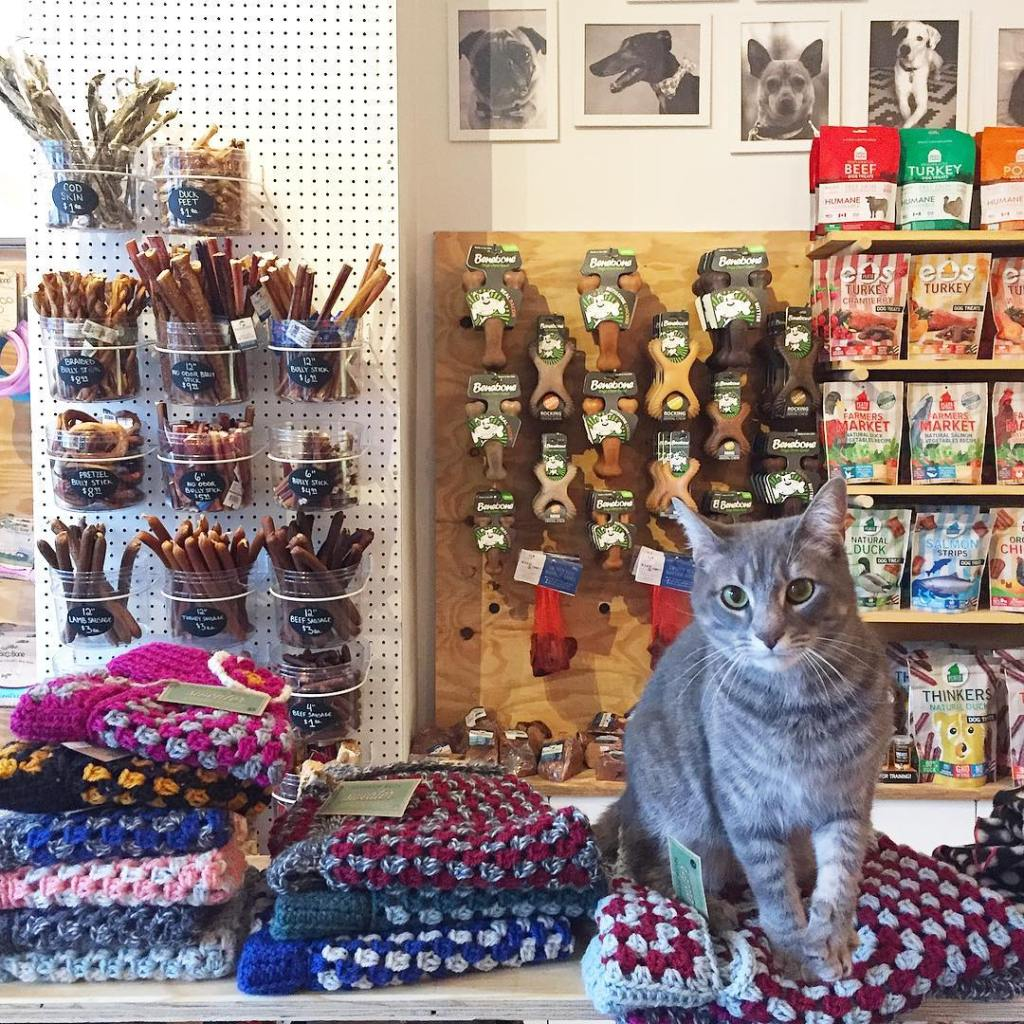 A gray tabby cat sitting on top of a pile of multicolored sweaters in a sunny pet store