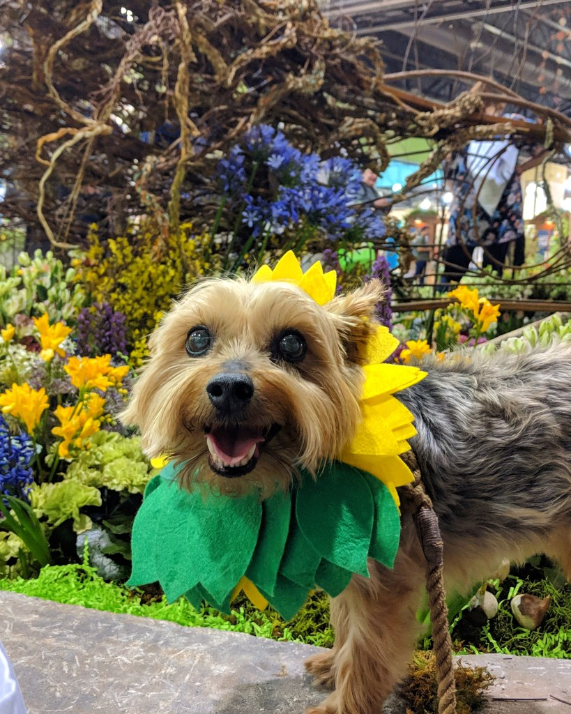 A small dog wearing a hat that looks like a sunflower stands in front of a colorful flower display.