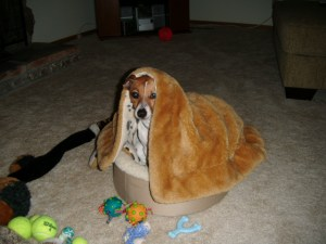 Silly dog in blanket
