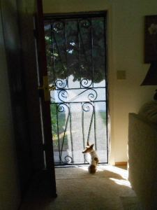 Misha catching a quiet moment at the door