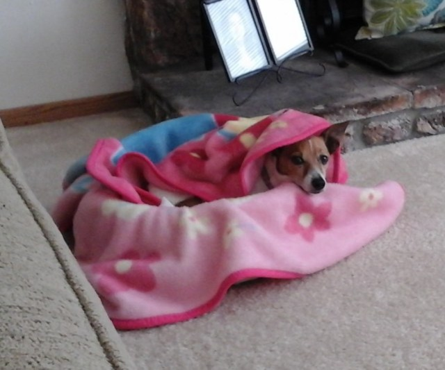 My dog keeping warm