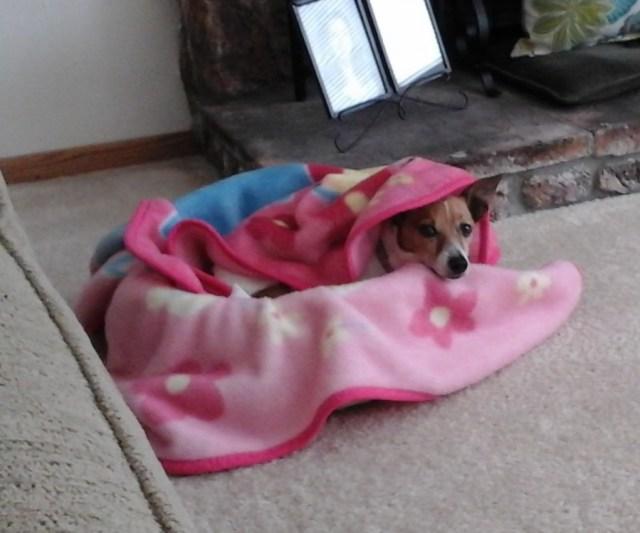 My dog keeping warm