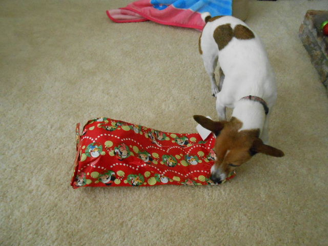 Will my dog ever open this present?