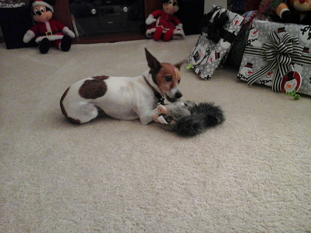 dog chewing on squirrel toy