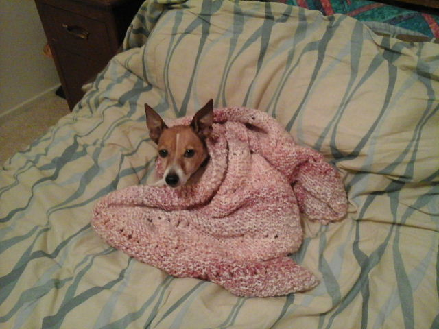 Very tired dog in blanket