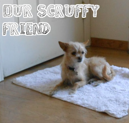 Scruffy terrier on rug