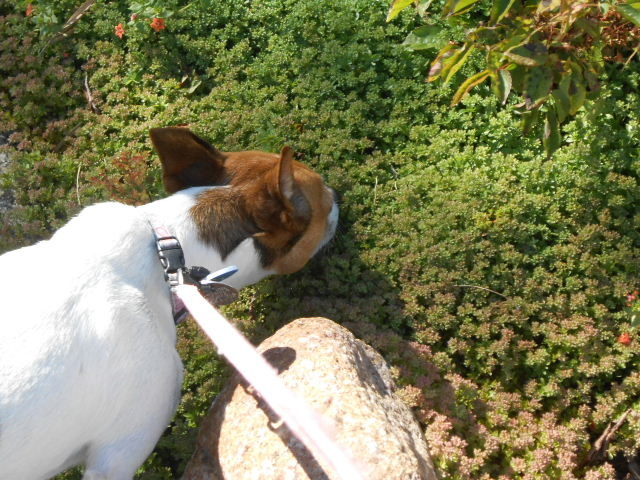 dog smelling bush