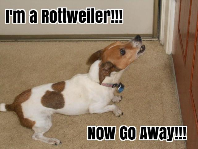 small dog barking at door