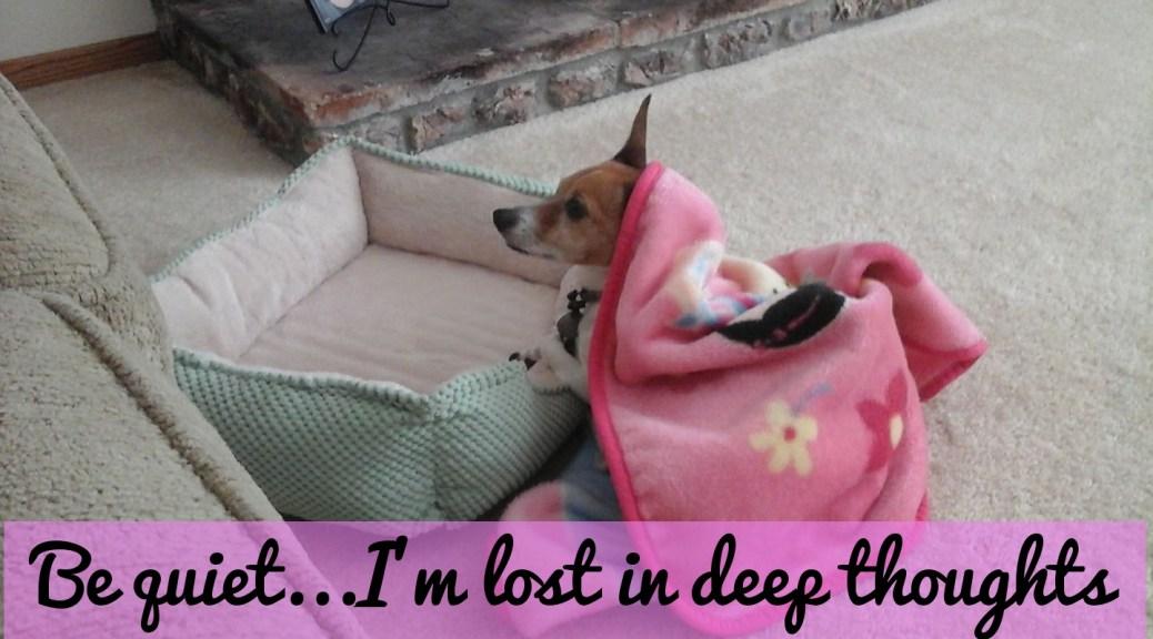 little dog thinking