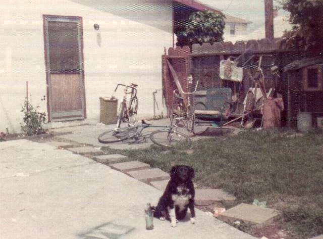 black dog in backyard