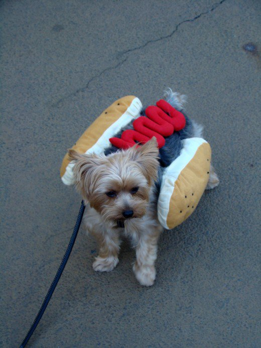 dog wearing a hot dog costume