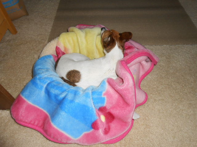 flea medication applied to dog