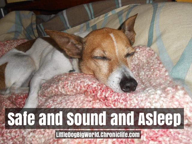 dog sleeping on pillow