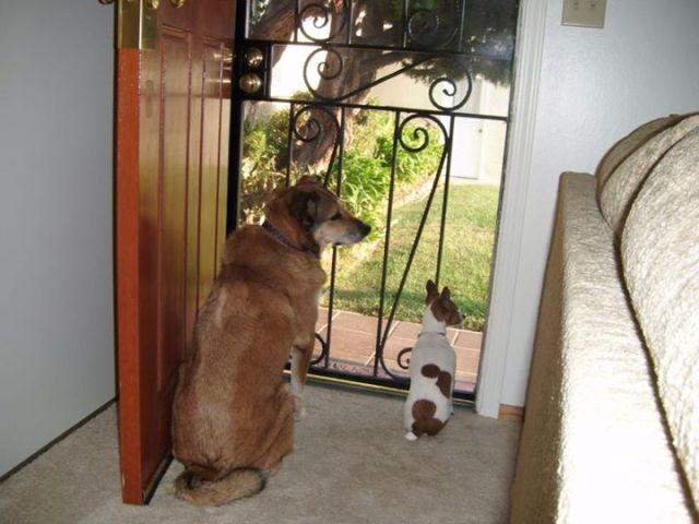 two dogs at front door