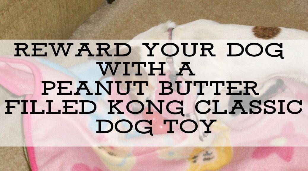 dog enjoys kong classic dog toy