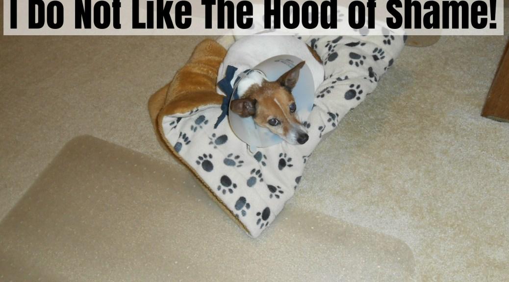 dog hood of shame