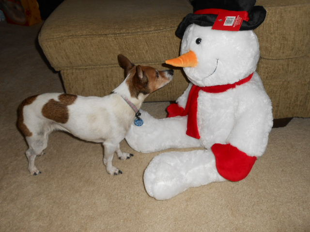 dog sniffs snowman toy
