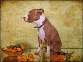 Dog with Autumn Harvest