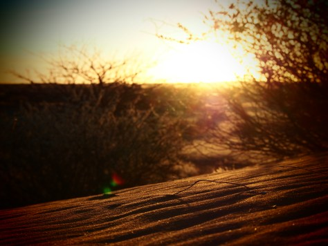 Sunset in the Kalahari Desert