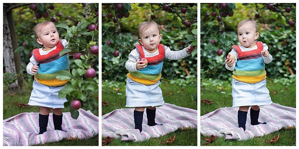 Baby picking apples in orchard. Bellingham photographer.
