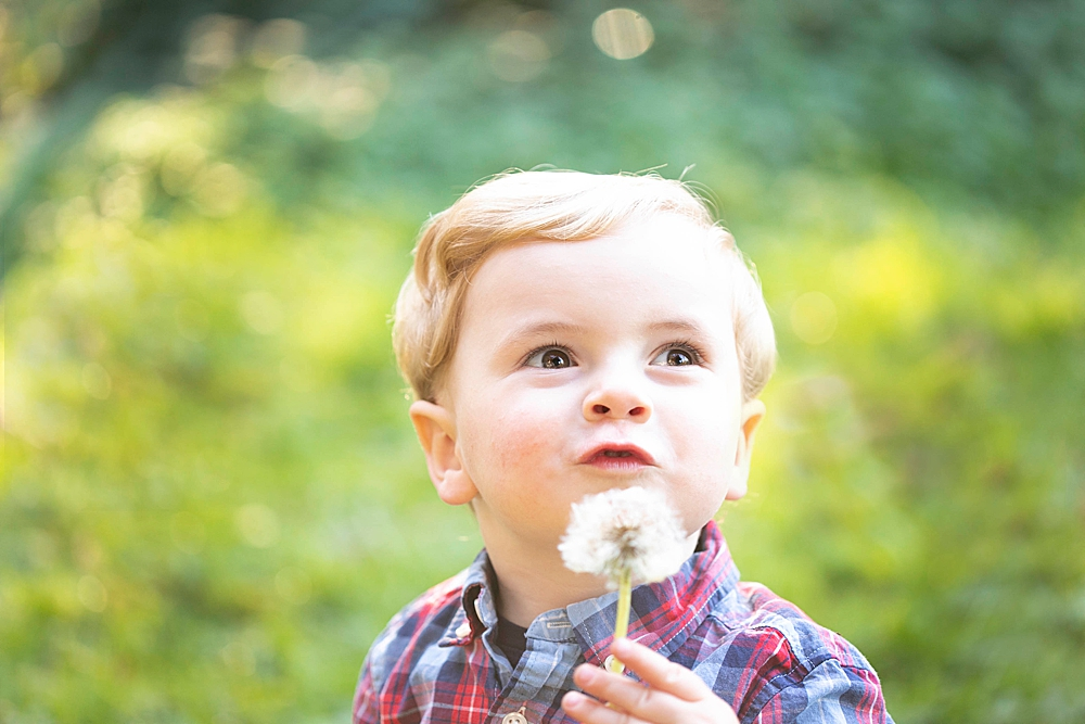Blonde toddler blowing dandelion in outdoor portrait session. Renee Bergeron Bellingham, WA